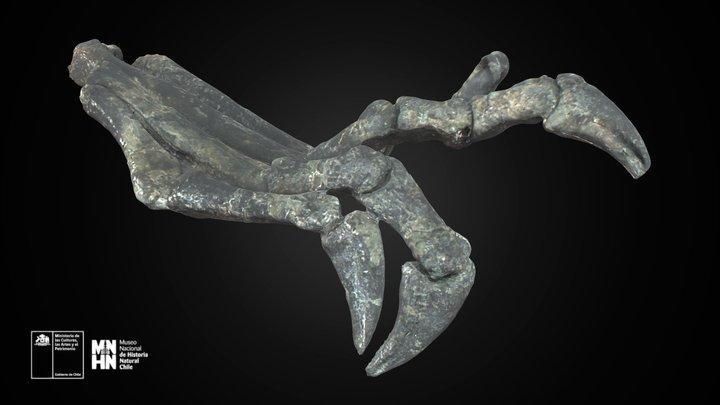 Chilesaurus diegosuarezi, pata izquierda 3D Model