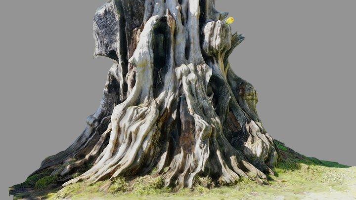 Big hollow tree stump 3D Model