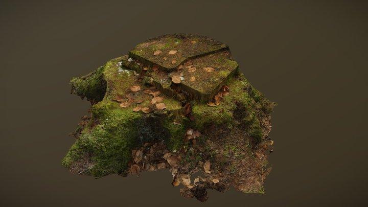 Detailed Spruce Tree Stump 3D Model