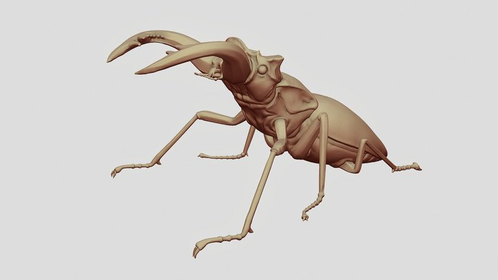 Stag Beetle Sculpt 3D Model