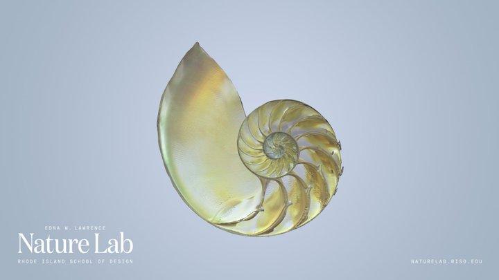 Chambered Nautilus 3D Model