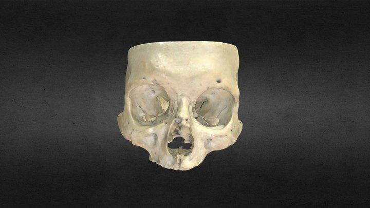 Base del cráneo/Skull base 3D Model
