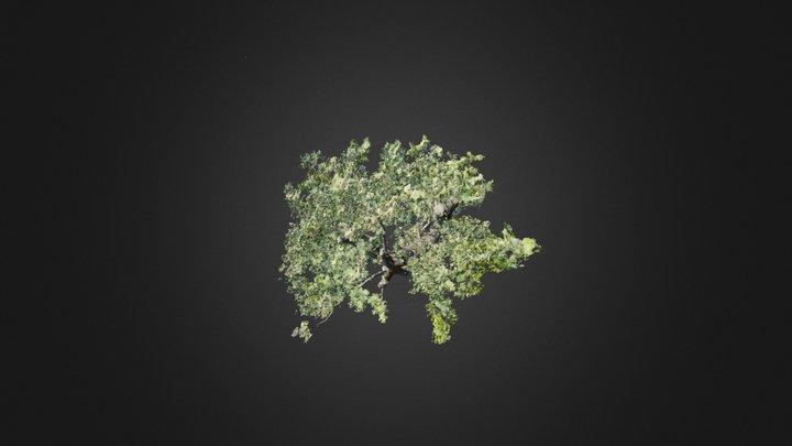 3D Tree #19 3D Model