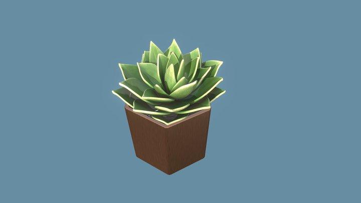 Succulent Echeveria Star Cactus 3D Model