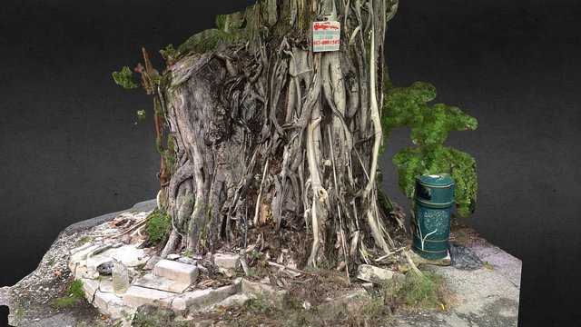 Tree Trunk (Fort Cornwallis, Penang) 3D Model