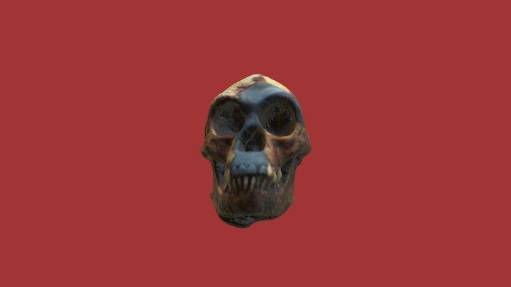 homo erectus skull tattersall-sawyer recreation 3D Model