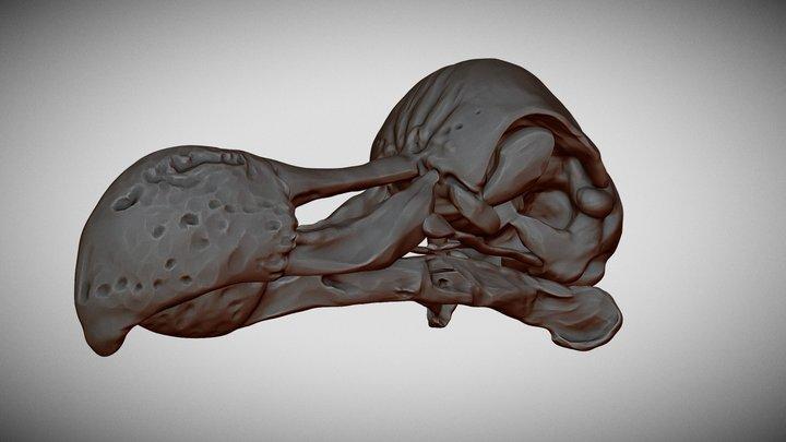 Dodo Skull 3D Model