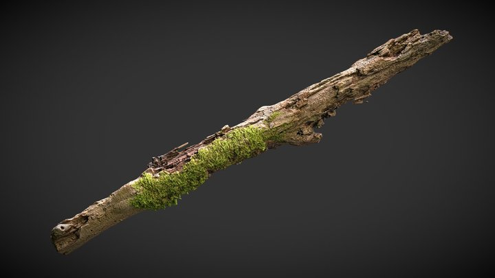 Rotting branch 01 3D Model