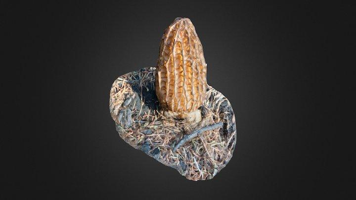 Morrel Mushroom 3D Model