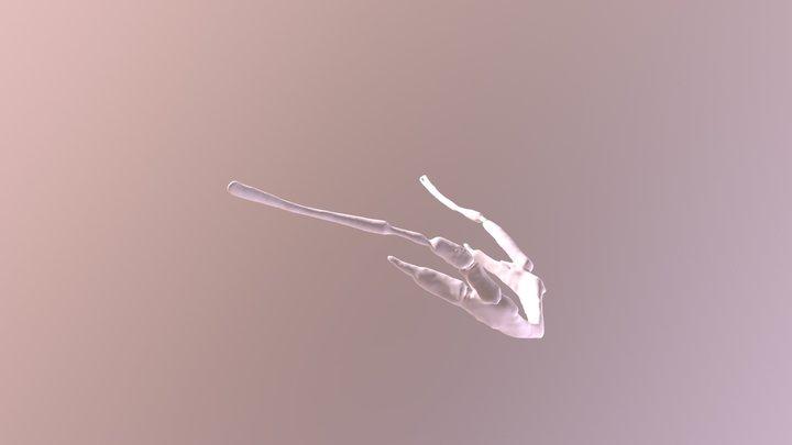 Aye-Aye Hyoid 3D Model