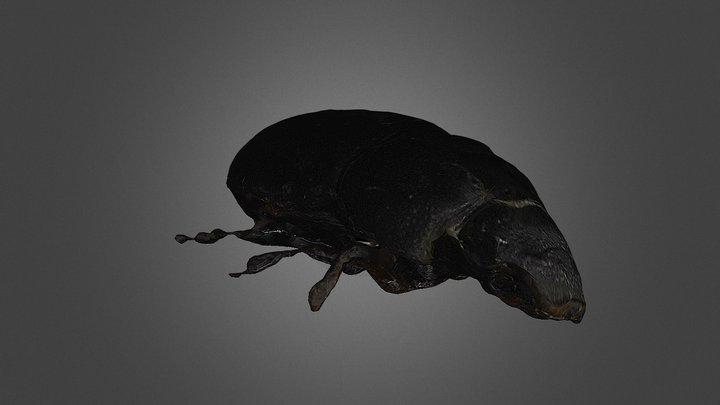 Black Beetle 3D Model