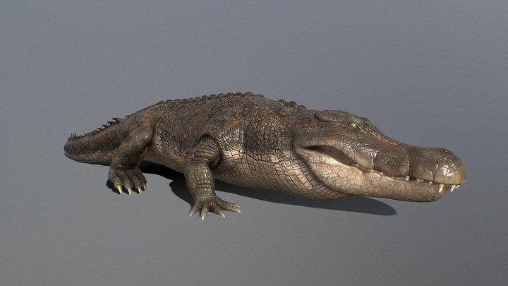 Anim Alligator 3D Model
