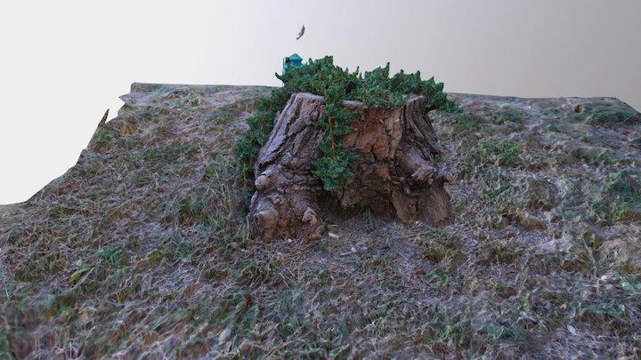 пень 3D Model