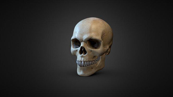 Human Skull 3D Model