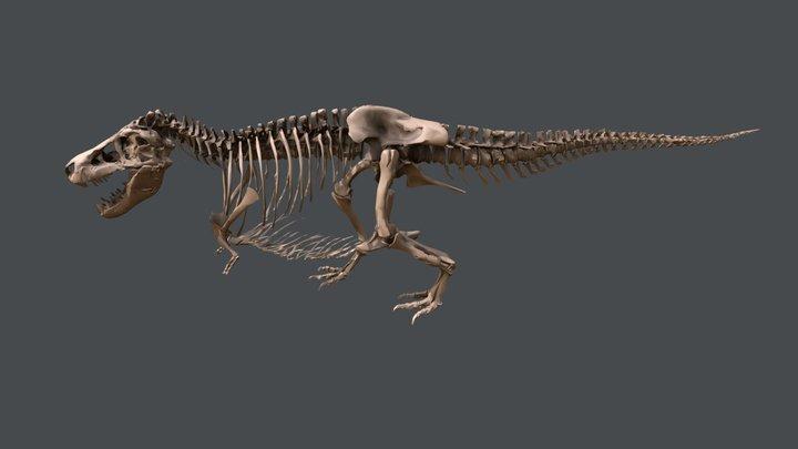 SUE el T. rex 3D Model