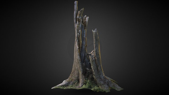 Photo-scanned Realistic Cracked Tree Trunk 3D Model