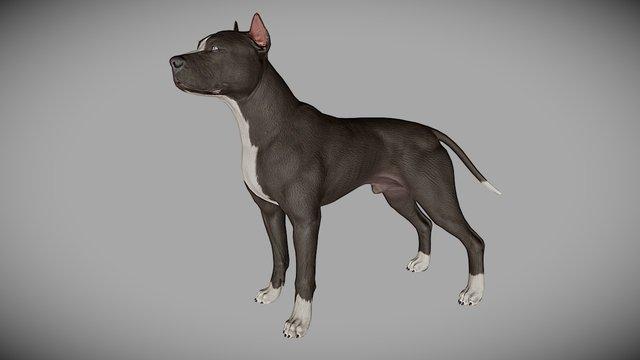 Pitbull 3D Model