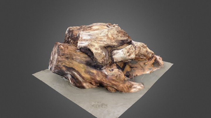 Driftwood 2 3D Model