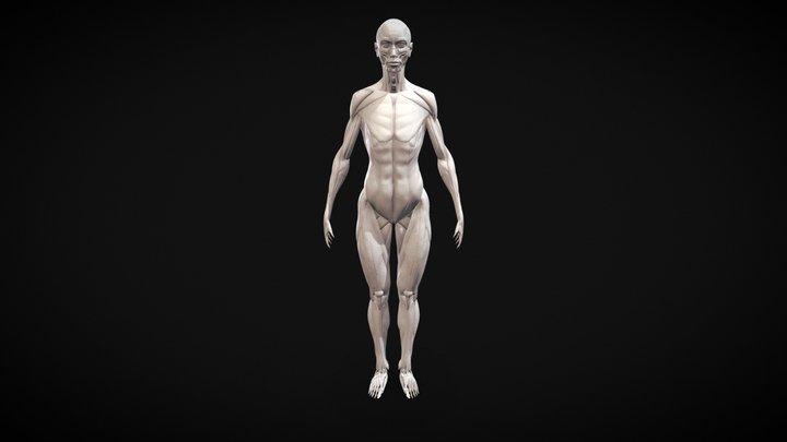 Female Écorché - NickoxArt 3D Model