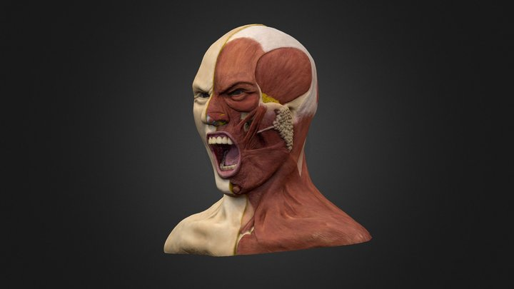 The Anatomy of Rage 3D Model