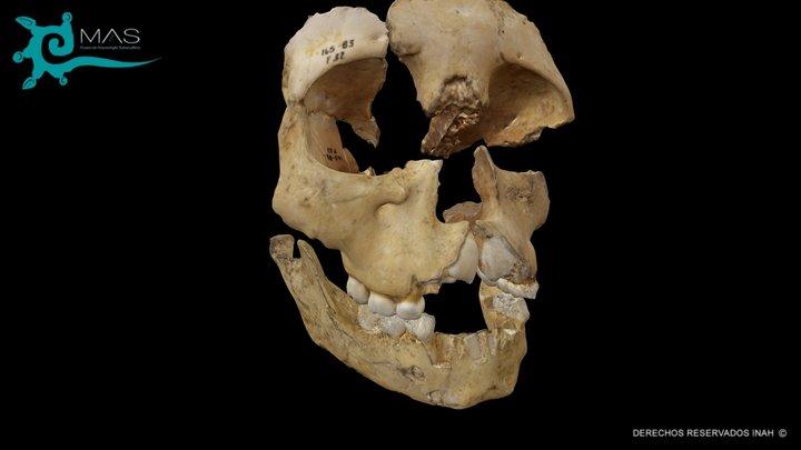 Cráneo de Infante 3D Model