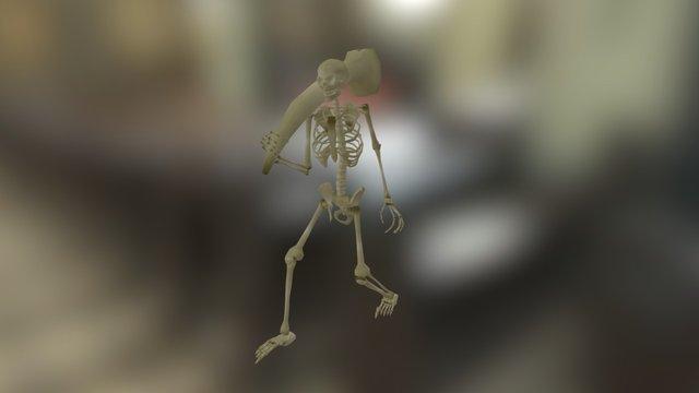 Skeleton Animation 3D Model