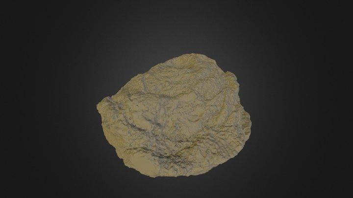 Pararaucaria collinsonae (NHMUK V 68525) CLEANED 3D Model