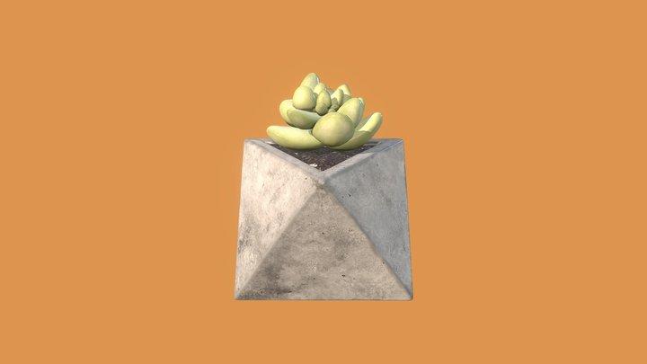 Octaeder Cactus 3D Model