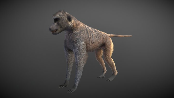 Baboon 3D Model