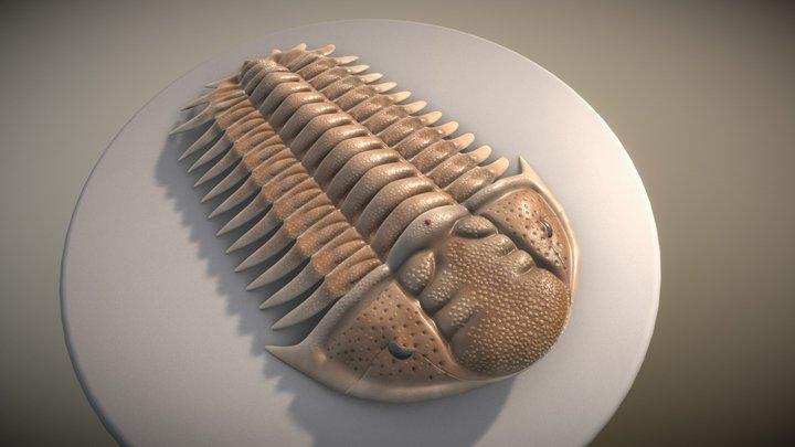trilobite Cheirurus obtusatus 3D Model