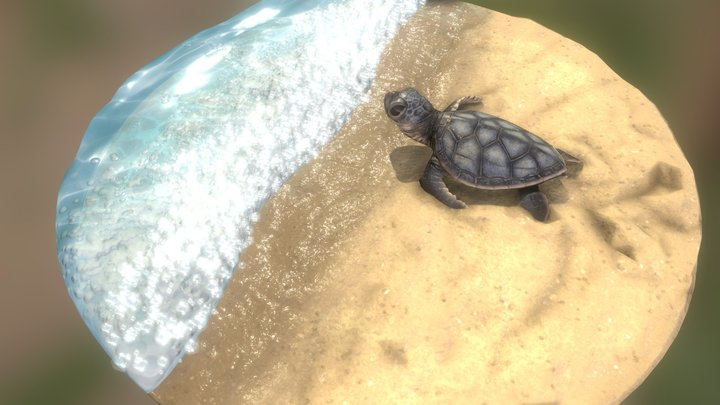 Baby sea turtle 3D Model