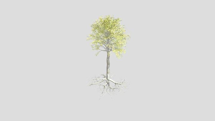 birch fungi root 3D Model