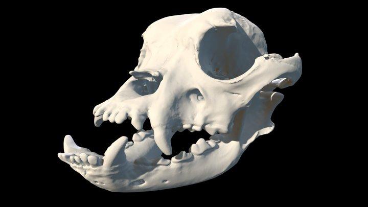 Bulldog Skull Lower Poly Version 3D Model