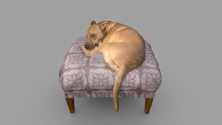 Lucy Dog Color 3D Scan 3D Model