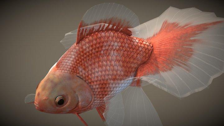 Tosakin goldfish 3D Model