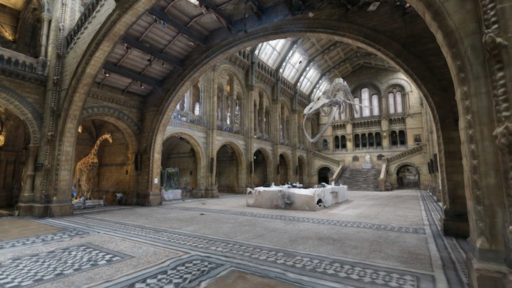 Hintze Hall, NHM London [surface model] 3D Model