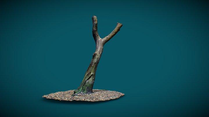 Tree - Photogrammetry 3D Model
