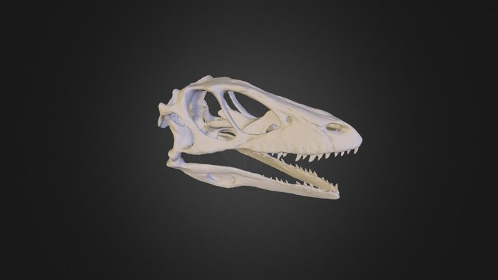 dinoskull_fixed_1 3D Model