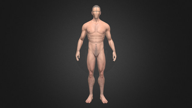 Male Body Reference 3D Model