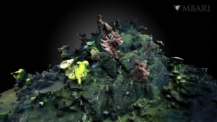 D. Ricketts Dive# 1189 - Coral & Sponge Garden 3D Model
