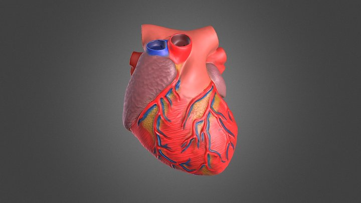 The Heart 3D Model