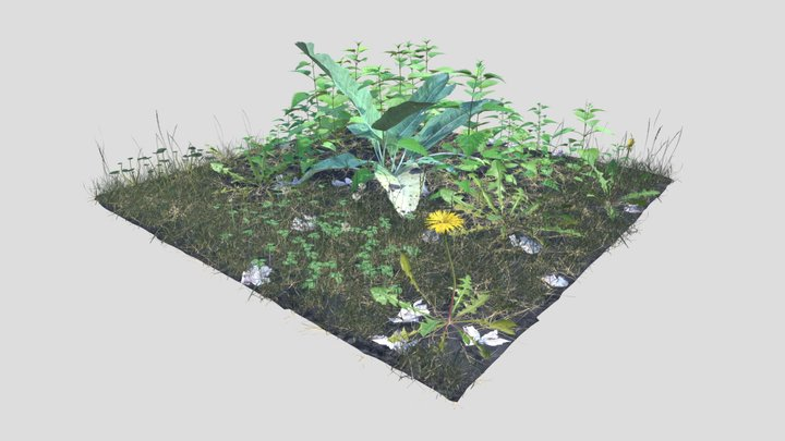 Meadow Patch Nettle 3D Model