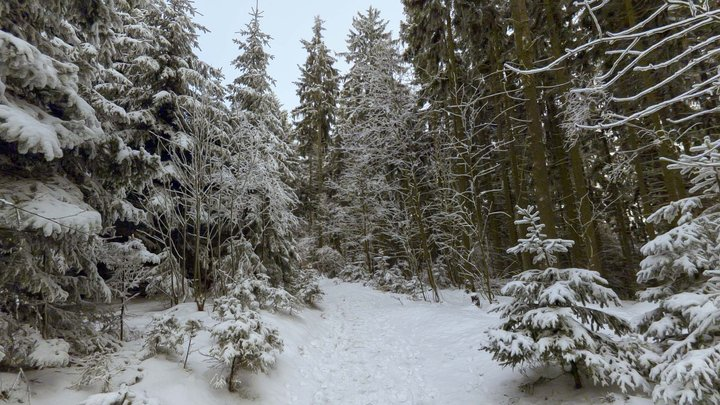 Sky Pano - Winter Forest 3D Model