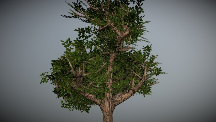 first tree 3D Model