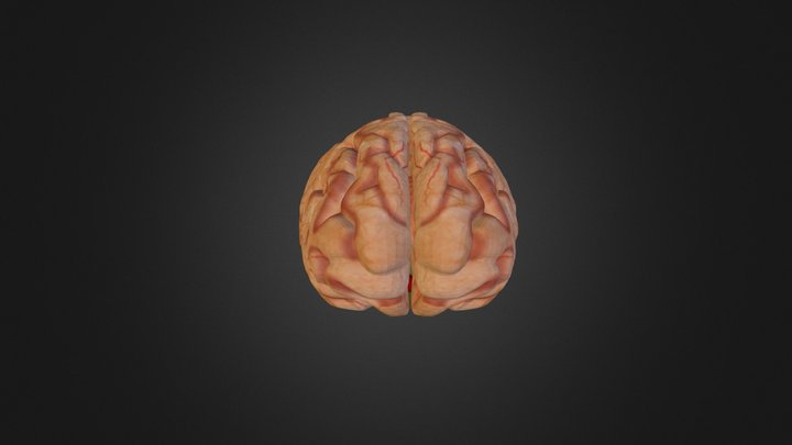 Brain (collection of thunthu) 3D Model