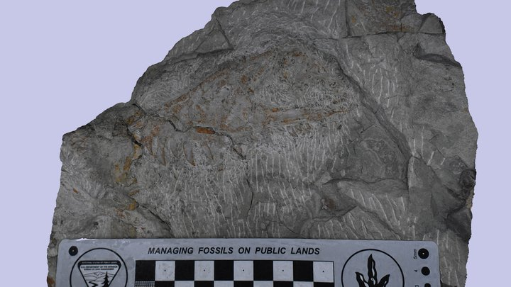 Utahraptor maxilla 3D Model
