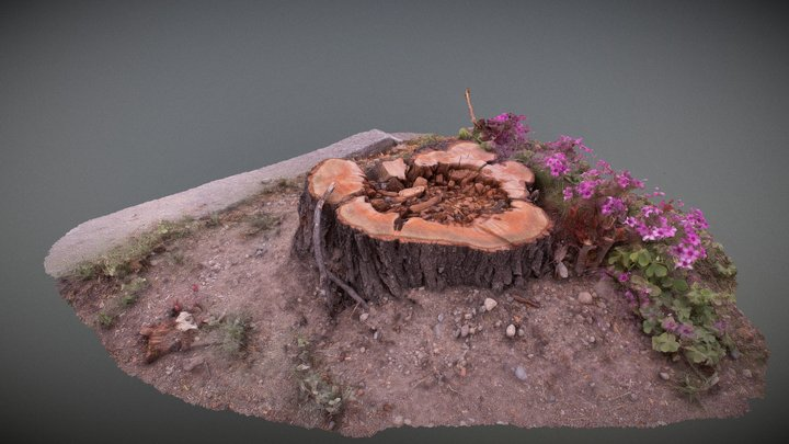 Tree Stump, flowers and clovers 3D Model