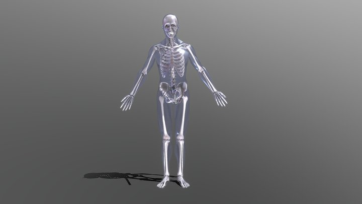 Skeleton Test 3D Model