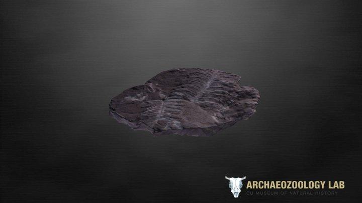 CUMNH Fossil Kit - Fern 3D Model