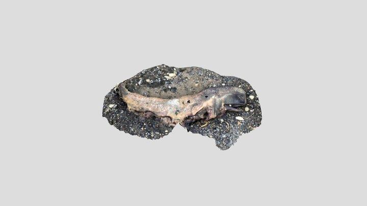 a dead sperm whale 3D Model